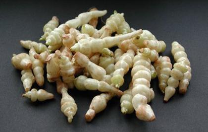 Chervis (Sium sisarum) et autres plantes oubliées. - Page 2 6a010534aec395970b01156e74c1aa970c-800wi